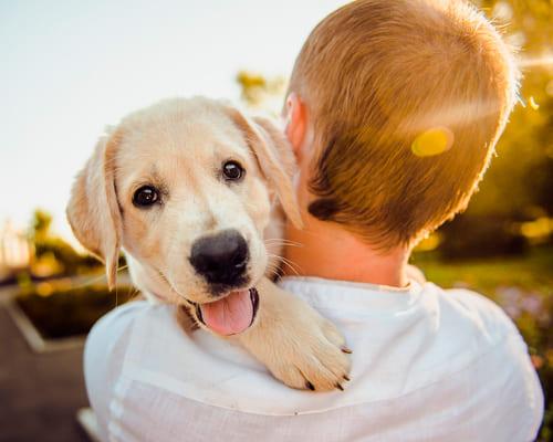 Французские слова на тему домашние животные
