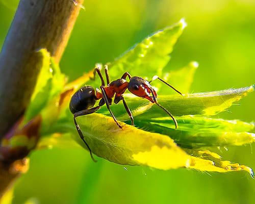Слова для темы насекомые на французском языке