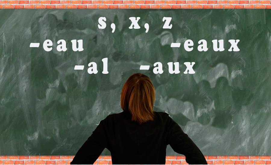 Число прилагательных и существительных во французском языке