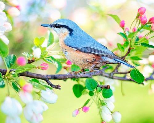 Французские слова для темы птицы и их разновидности